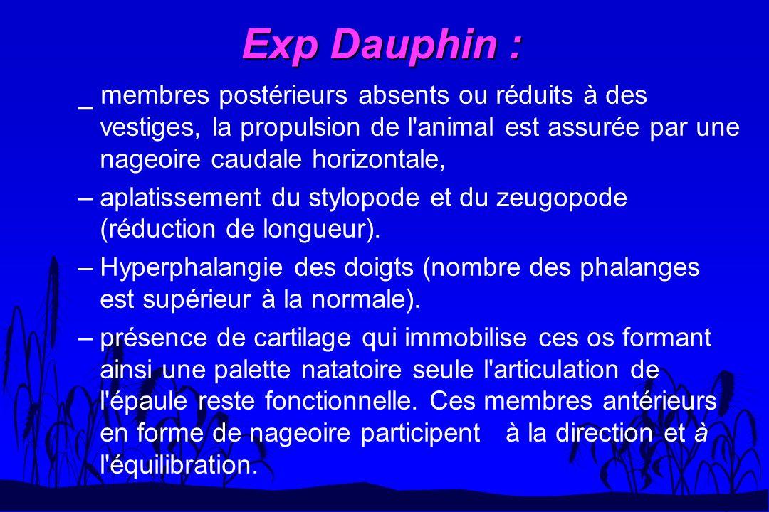 Exp Dauphin : _ membres postérieurs absents ou réduits à des vestiges, la propulsion de l'animal est assurée par une nageoire caudale horizontale, –ap