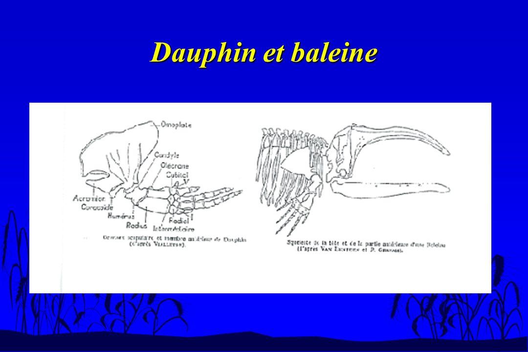Dauphin et baleine