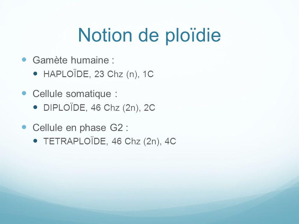 Notion de ploïdie Gamète humaine : HAPLOÏDE, 23 Chz (n), 1C Cellule somatique : DIPLOÏDE, 46 Chz (2n), 2C Cellule en phase G2 : TETRAPLOÏDE, 46 Chz (2n), 4C