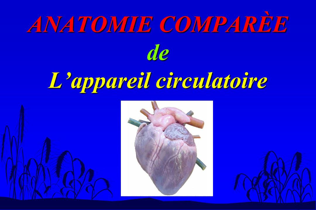 ANATOMIE COMPARÈE de Lappareil circulatoire