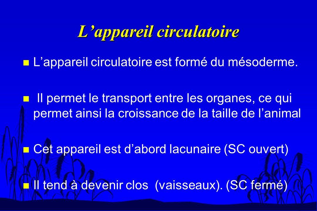 n Lappareil circulatoire est formé du mésoderme. n Il permet le transport entre les organes, ce qui permet ainsi la croissance de la taille de lanimal