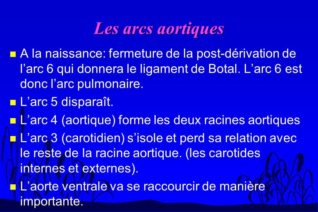 Les arcs aortiques n A la naissance: fermeture de la post-dérivation de larc 6 qui donnera le ligament de Botal. Larc 6 est donc larc pulmonaire. n La