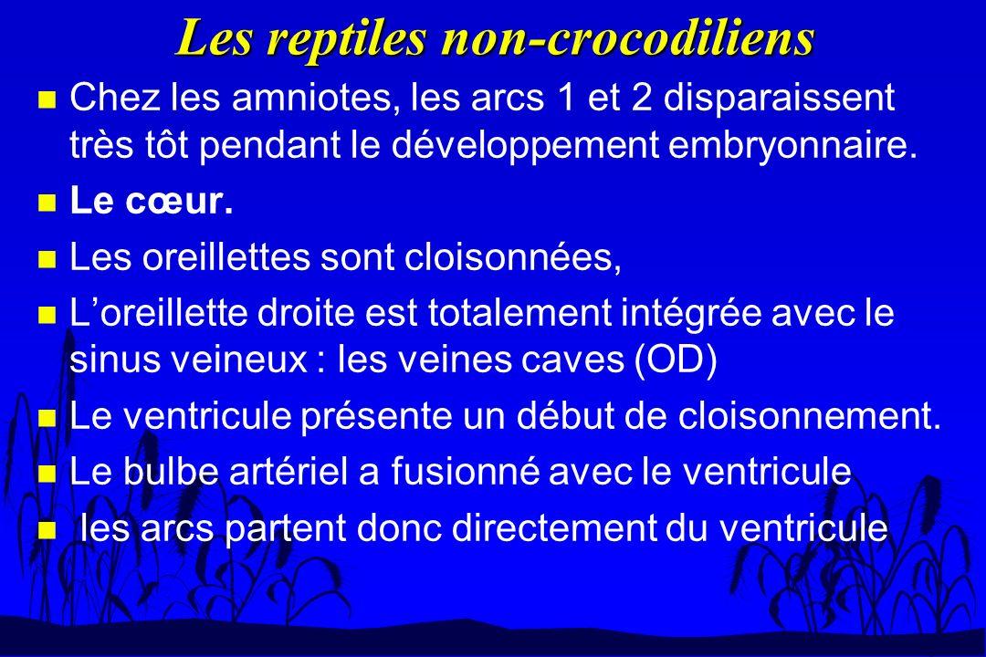 Les reptiles non-crocodiliens n Chez les amniotes, les arcs 1 et 2 disparaissent très tôt pendant le développement embryonnaire. n Le cœur. n Les orei