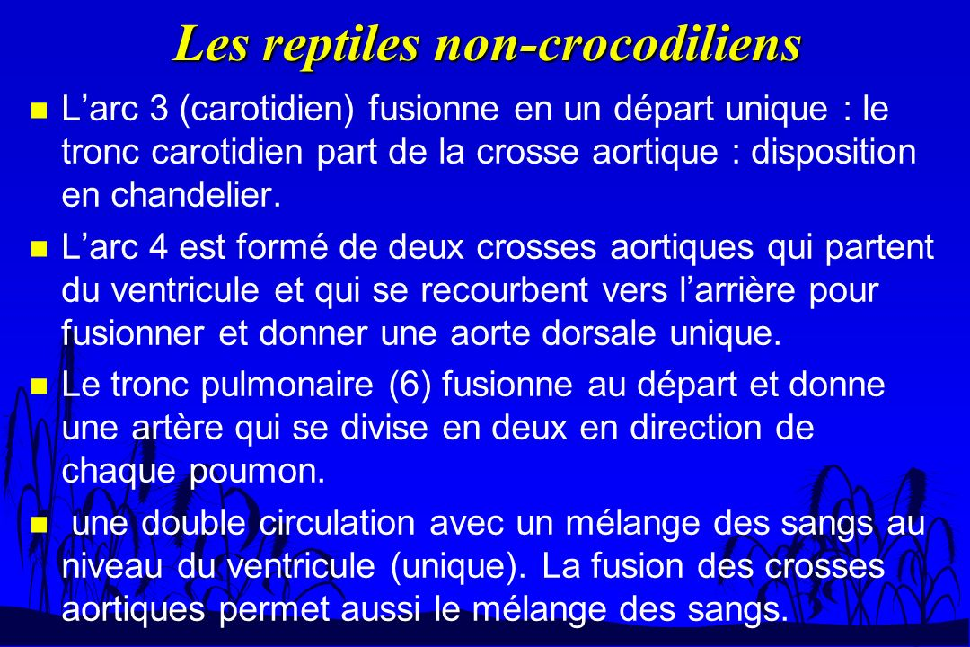Les reptiles non-crocodiliens n Larc 3 (carotidien) fusionne en un départ unique : le tronc carotidien part de la crosse aortique : disposition en cha