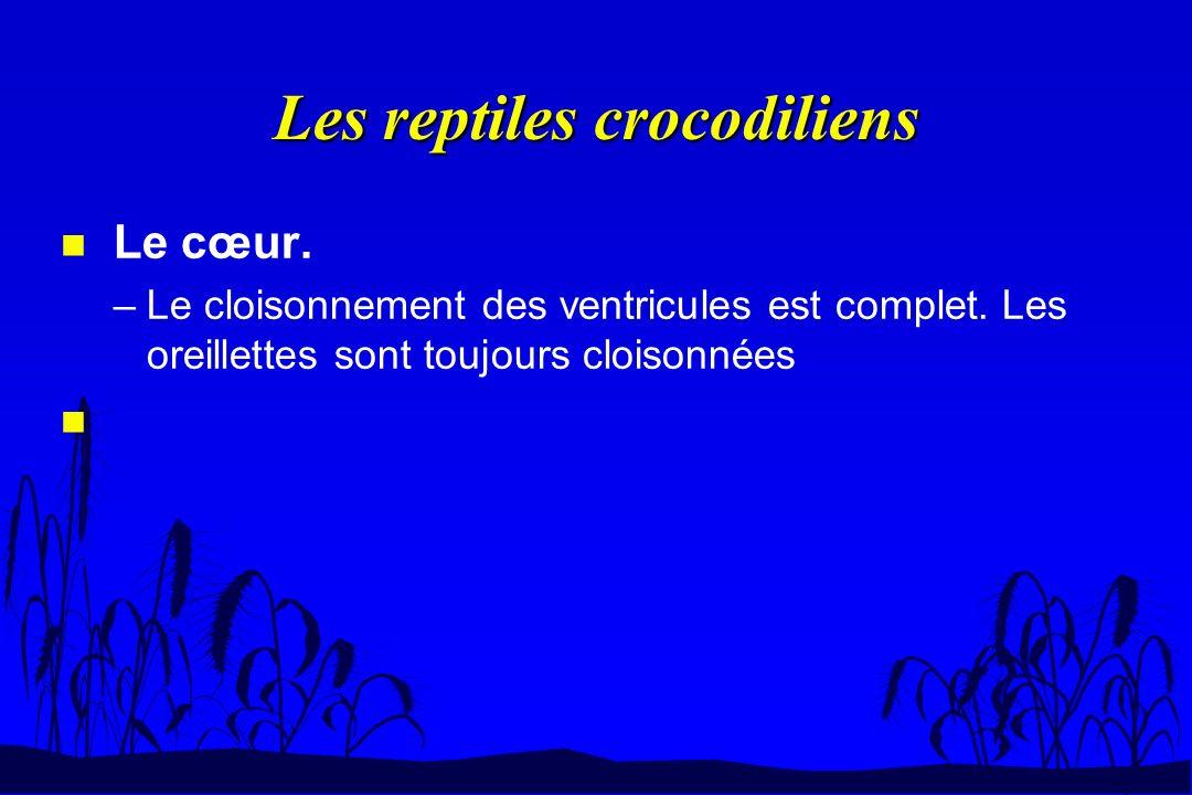 Les reptiles crocodiliens n Le cœur. –Le cloisonnement des ventricules est complet. Les oreillettes sont toujours cloisonnées n