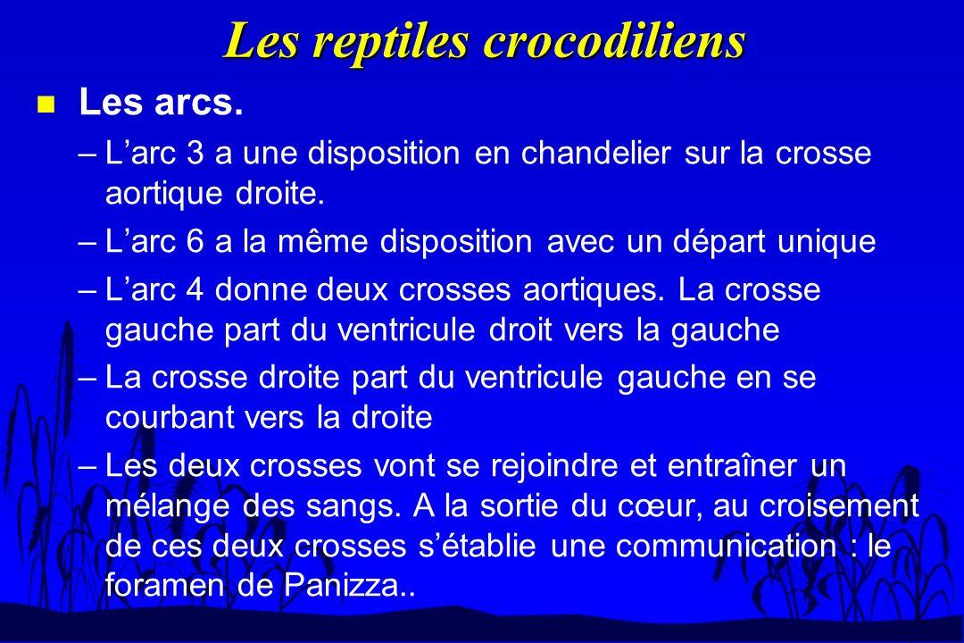 Les reptiles crocodiliens n Les arcs. –Larc 3 a une disposition en chandelier sur la crosse aortique droite. –Larc 6 a la même disposition avec un dép