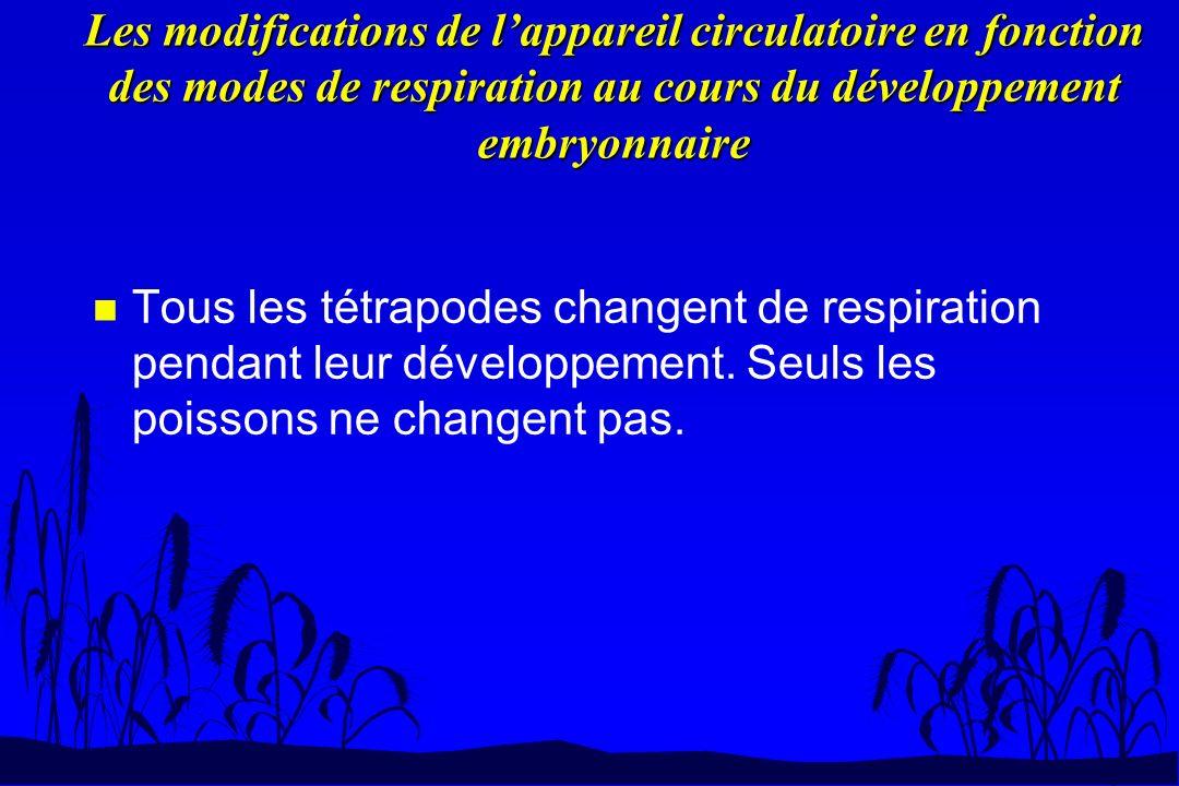 Les modifications de lappareil circulatoire en fonction des modes de respiration au cours du développement embryonnaire n Tous les tétrapodes changent
