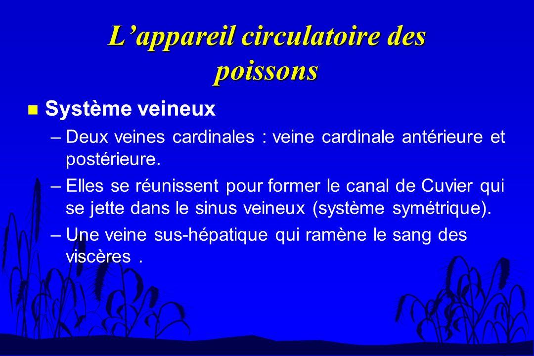 n Système veineux –Deux veines cardinales : veine cardinale antérieure et postérieure. –Elles se réunissent pour former le canal de Cuvier qui se jett