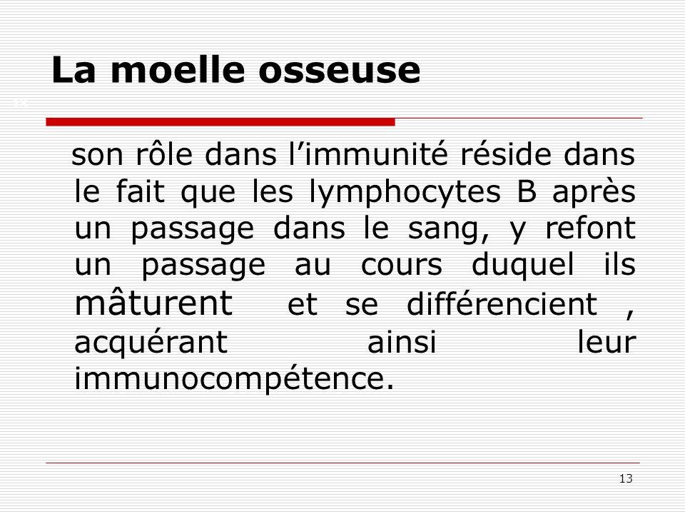 13 La moelle osseuse son rôle dans limmunité réside dans le fait que les lymphocytes B après un passage dans le sang, y refont un passage au cours duq