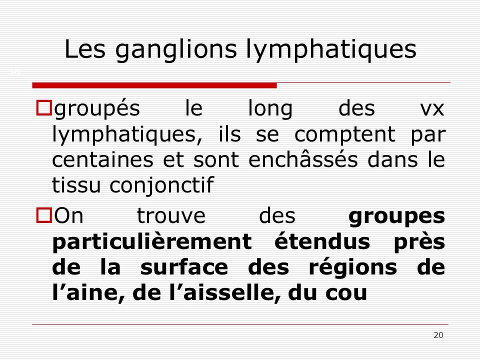 20 Les ganglions lymphatiques groupés le long des vx lymphatiques, ils se comptent par centaines et sont enchâssés dans le tissu conjonctif On trouve