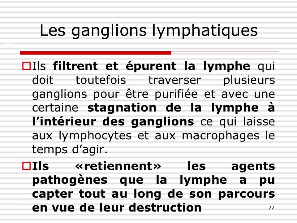 22 Les ganglions lymphatiques Ils filtrent et épurent la lymphe qui doit toutefois traverser plusieurs ganglions pour être purifiée et avec une certai