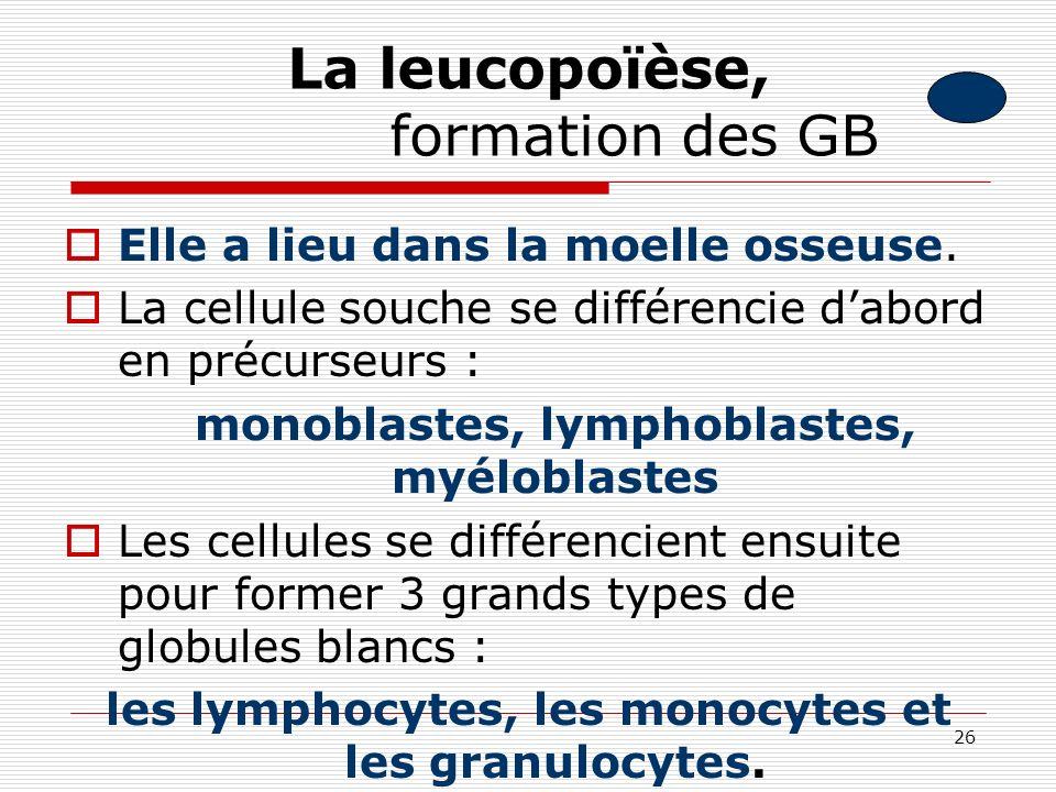26 La leucopoïèse, formation des GB Elle a lieu dans la moelle osseuse. La cellule souche se différencie dabord en précurseurs : monoblastes, lymphobl