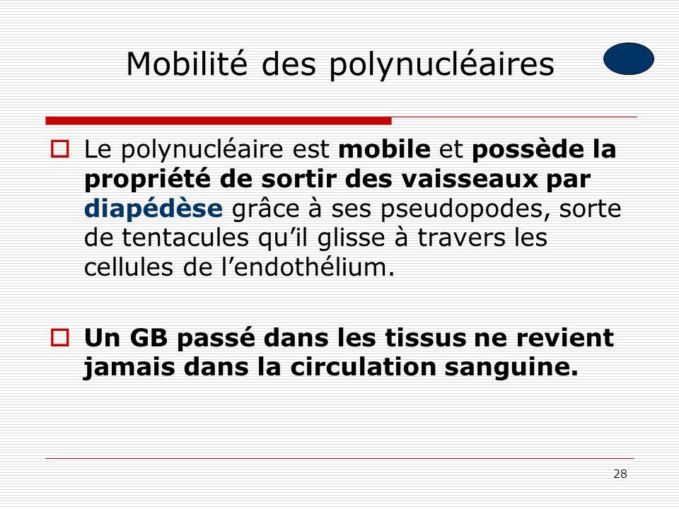 28 Mobilité des polynucléaires Le polynucléaire est mobile et possède la propriété de sortir des vaisseaux par diapédèse grâce à ses pseudopodes, sort