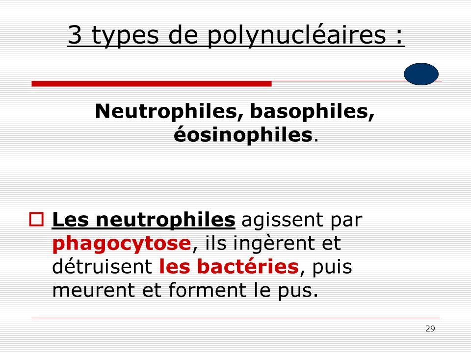 29 3 types de polynucléaires : Neutrophiles, basophiles, éosinophiles. Les neutrophiles agissent par phagocytose, ils ingèrent et détruisent les bacté