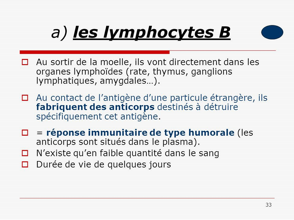 33 a) les lymphocytes B Au sortir de la moelle, ils vont directement dans les organes lymphoïdes (rate, thymus, ganglions lymphatiques, amygdales…). A
