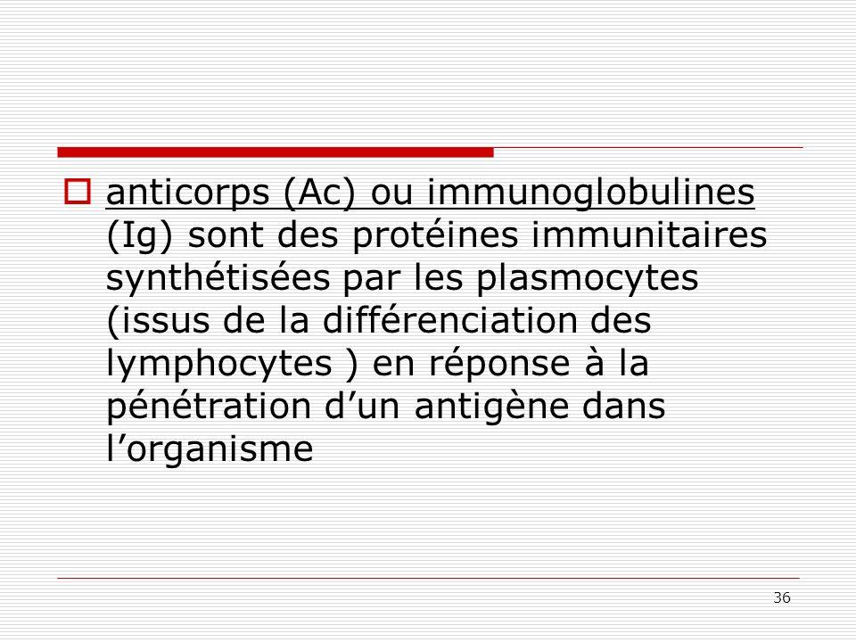 36 anticorps (Ac) ou immunoglobulines (Ig) sont des protéines immunitaires synthétisées par les plasmocytes (issus de la différenciation des lymphocyt
