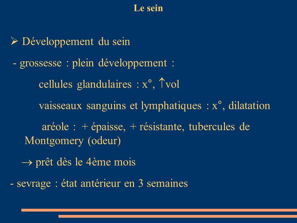 Le sein Développement du sein - grossesse : plein développement : cellules glandulaires : x°, vol vaisseaux sanguins et lymphatiques : x°, dilatation