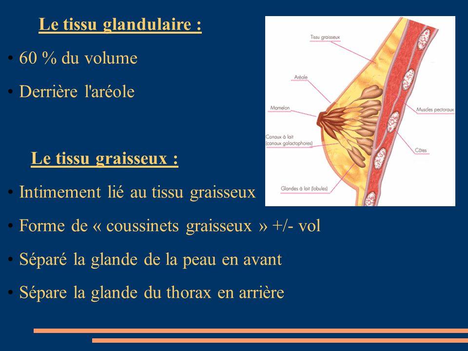 Le tissu glandulaire : 60 % du volume Derrière l'aréole Le tissu graisseux : Intimement lié au tissu graisseux Forme de « coussinets graisseux » +/- v