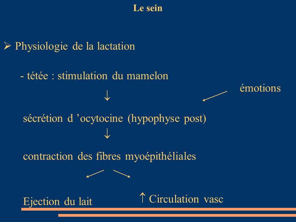 Le sein Physiologie de la lactation - tétée : stimulation du mamelon sécrétion d ocytocine (hypophyse post) émotions contraction des fibres myoépithél