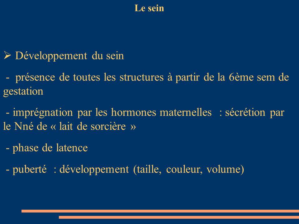 Le sein Développement du sein - présence de toutes les structures à partir de la 6ème sem de gestation - imprégnation par les hormones maternelles : s