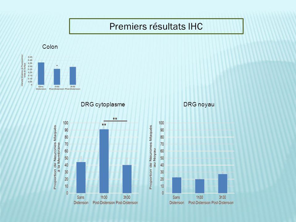 Colon Premiers résultats IHC DRG cytoplasmeDRG noyau