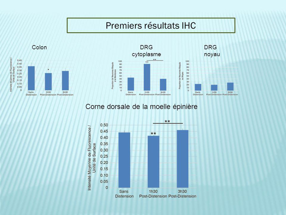 Colon Premiers résultats IHC Corne dorsale de la moelle épinière DRG cytoplasme DRG noyau