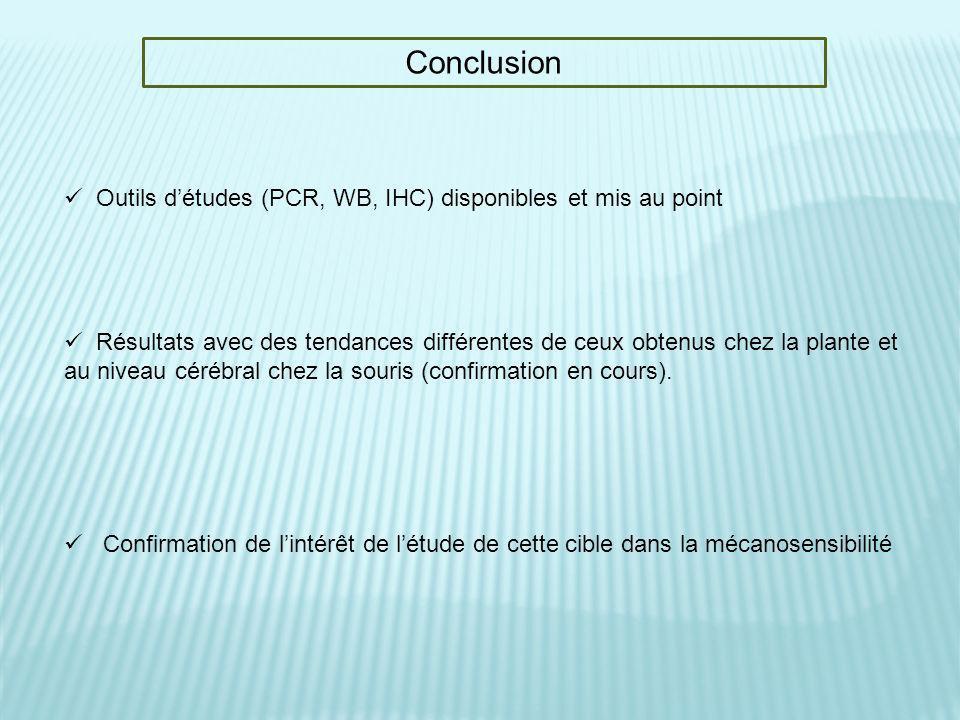 Conclusion Outils détudes (PCR, WB, IHC) disponibles et mis au point Résultats avec des tendances différentes de ceux obtenus chez la plante et au niv