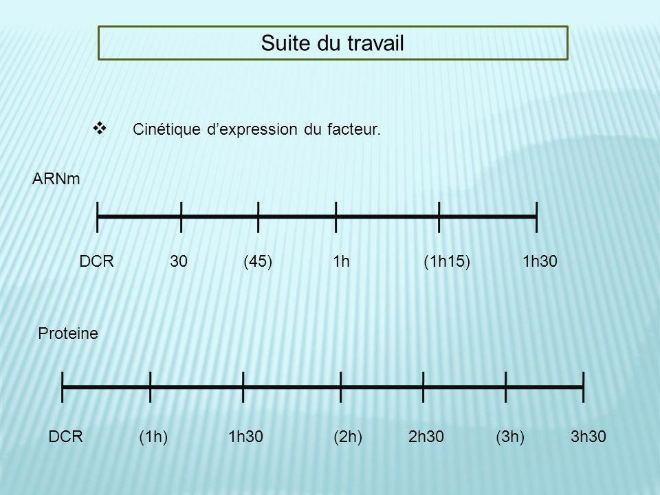 Suite du travail Cinétique dexpression du facteur. DCR 30 (45) 1h (1h15) 1h30 DCR (1h) 1h30 (2h) 2h30 (3h) 3h30 ARNm Proteine