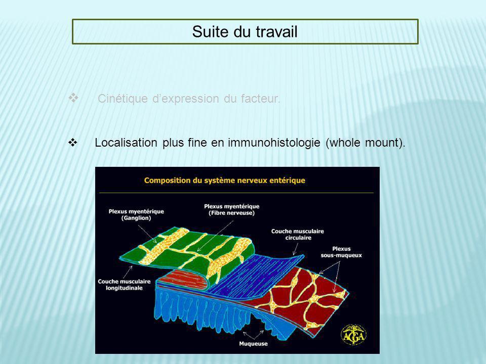 Suite du travail Cinétique dexpression du facteur. Localisation plus fine en immunohistologie (whole mount).