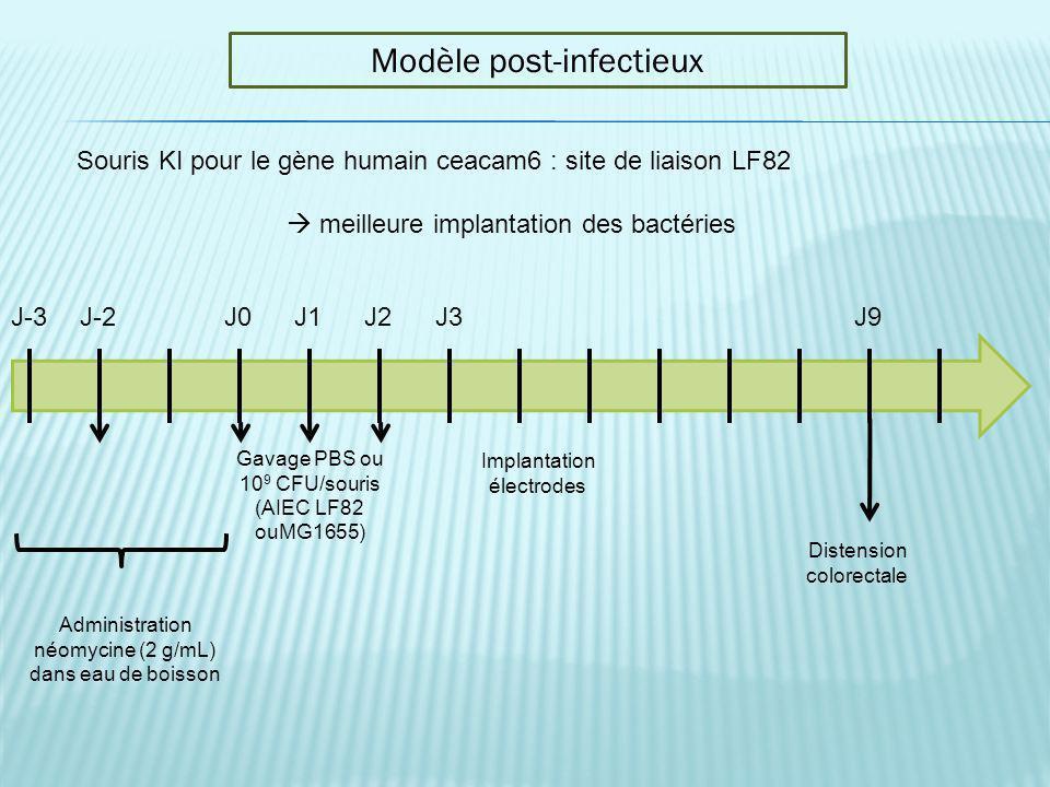 J-3J-2J0J1J2J3J9 Administration néomycine (2 g/mL) dans eau de boisson Gavage PBS ou 10 9 CFU/souris (AIEC LF82 ouMG1655) Distension colorectale Modèl
