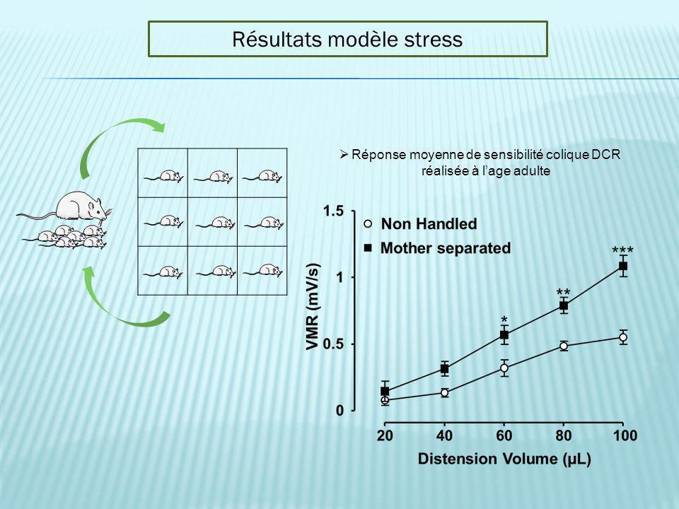 Résultats modèle stress Réponse moyenne de sensibilité colique DCR réalisée à lage adulte