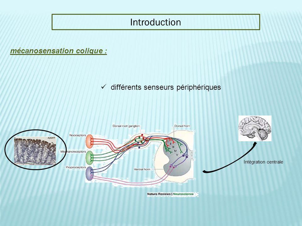 Introduction mécanosensation colique : différents senseurs périphériques Intégration centrale