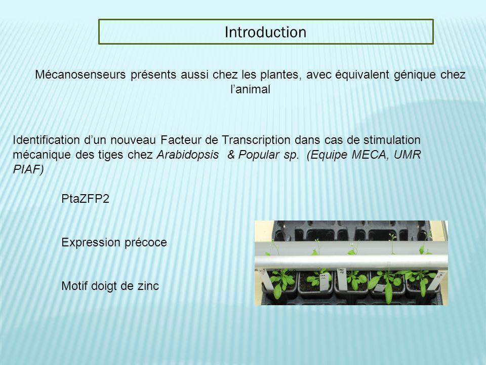 Introduction Identification dun nouveau Facteur de Transcription dans cas de stimulation mécanique des tiges chez Arabidopsis & Popular sp. (Equipe ME