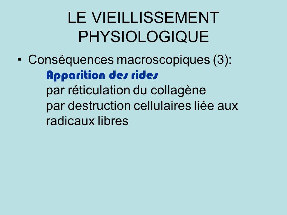 LE VIEILLISSEMENT PHYSIOLOGIQUE Conséquences macroscopiques (3): Apparition des rides par réticulation du collagène par destruction cellulaires liée aux radicaux libres