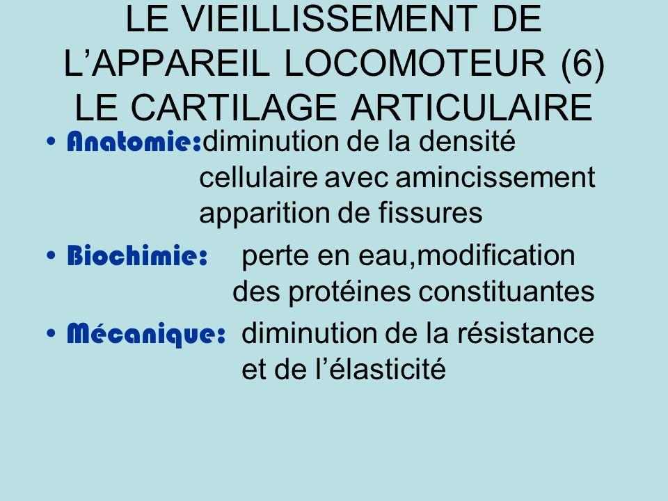 LE VIEILLISSEMENT DE LAPPAREIL LOCOMOTEUR (6) LE CARTILAGE ARTICULAIRE Anatomie: diminution de la densité cellulaire avec amincissement apparition de fissures Biochimie: perte en eau,modification des protéines constituantes Mécanique: diminution de la résistance et de lélasticité