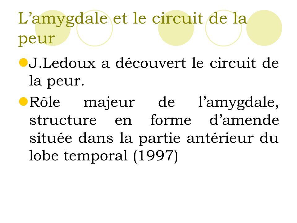 Lamygdale et le circuit de la peur J.Ledoux a découvert le circuit de la peur.