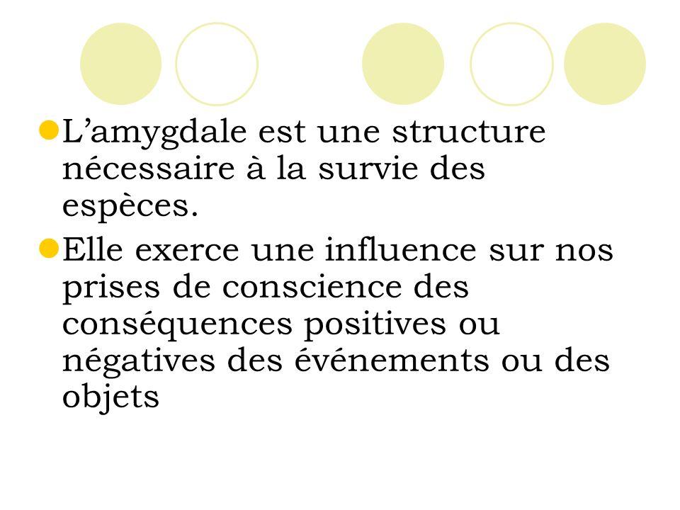 Lamygdale est une structure nécessaire à la survie des espèces.