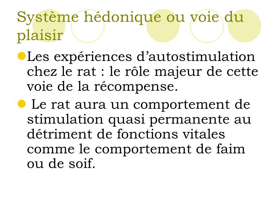 Système hédonique ou voie du plaisir Les expériences dautostimulation chez le rat : le rôle majeur de cette voie de la récompense.