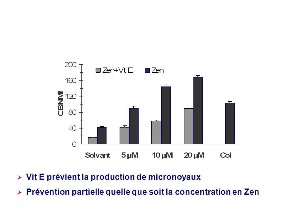 Vit E prévient la production de micronoyaux Prévention partielle quelle que soit la concentration en Zen