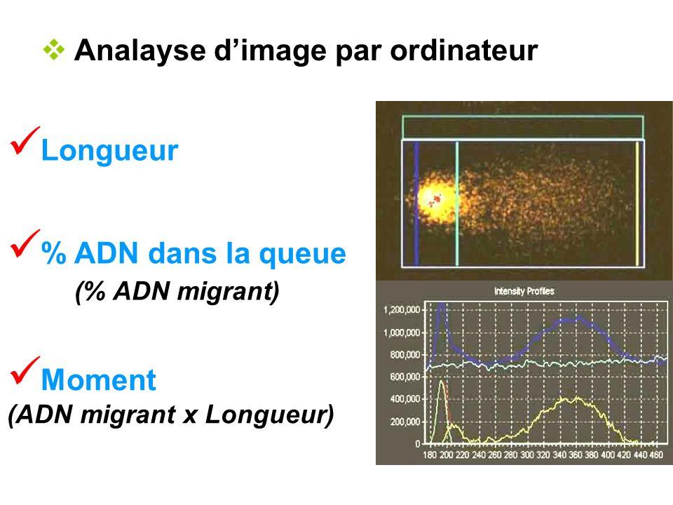 Longueur Analayse dimage par ordinateur % ADN dans la queue (% ADN migrant) Moment (ADN migrant x Longueur)