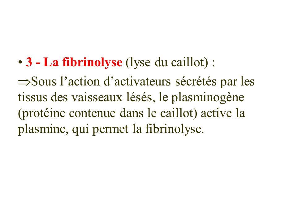 3 - La fibrinolyse (lyse du caillot) : Sous laction dactivateurs sécrétés par les tissus des vaisseaux lésés, le plasminogène (protéine contenue dans