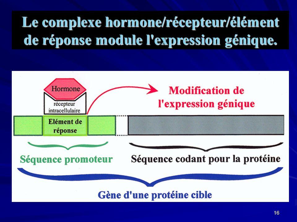 15 Mode d action intracellulaire des hormones Thyroïdienne