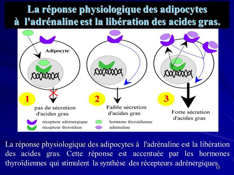 16 Le complexe hormone/récepteur/élément de réponse module l expression génique.