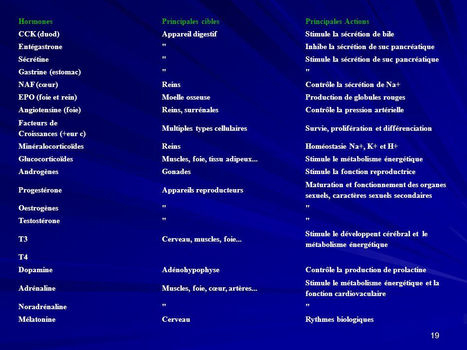 18 Hormones Principales ciblesPrincipales Actions Ocytocine (hypothal)Utérus et glandes mammairesContractions utérines et excrétion du lait VasopressineReinsStimule la réabsorption de leau CRHAdénohypophyseStimulation de la sécrétion dACTH GnRH Stimulation de la sécrétion de FSH et LH GHRH Stimulation de la sécrétion de GH GHIH Inhibition de la sécrétion de GH et TRH TRH Stimule la sécrétion de TSH et prolactine ACTH (adénohypop)Cortico-surrénales Stimulation de la sécrétion des stéroïdes FSHGonades Stimule la reproduction et la sécrétion des hormones sexuelles LH TSHThyroïde Stimulation de la sécrétion de T3 et de T4 GHOs et autres tissus Stimule la croissance et le métabolisme énergétique MSHMélanocytesPigmentation cutanée ProlactineSeinsDéveloppement des seins et synthèse du lait Insuline (pancréas)Muscles, foie, tissu adipeux Stimule le stockage et lutilisation cellulaire du glucose GlucagonNombreux type cellulairesStimule le déstockage du glucose Parathormone (parathyOs et reins Homéostasie Ca++ Calcitonine (thyroïde)OsCalcification, homéostasie Ca++