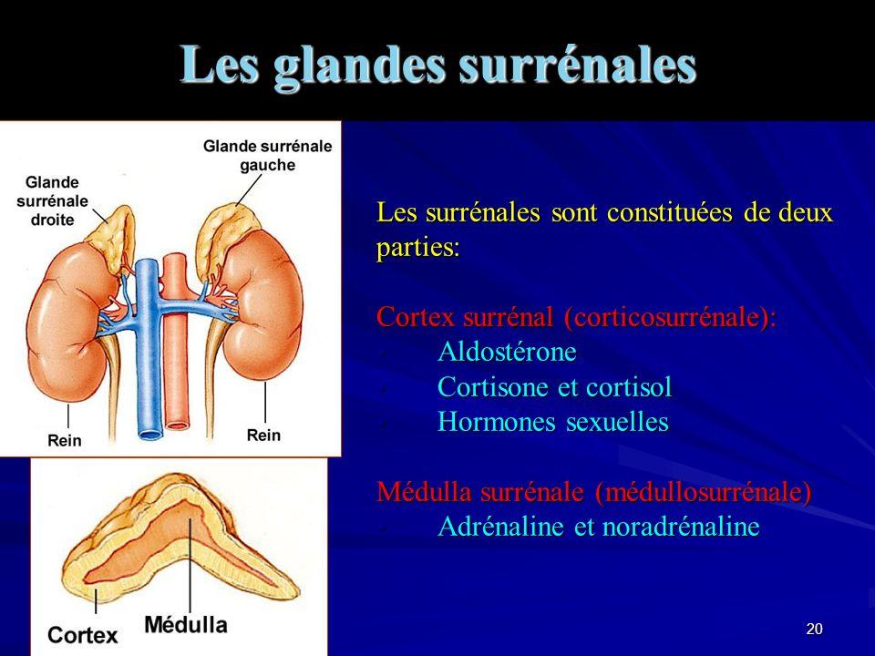 19 Hormones Principales ciblesPrincipales Actions CCK (duod)Appareil digestifStimule la sécrétion de bile Entégastrone Inhibe la sécrétion de suc pancréatique Sécrétine Stimule la sécrétion de suc pancréatique Gastrine (estomac) NAF (cœur)ReinsContrôle la sécrétion de Na+ EPO (foie et rein)Moelle osseuseProduction de globules rouges Angiotensine (foie)Reins, surrénalesContrôle la pression artérielle Facteurs de Croissances (+eur c) Multiples types cellulairesSurvie, prolifération et différenciation Minéralocorticoïdes ReinsHoméostasie Na+, K+ et H+ Glucocorticoïdes Muscles, foie, tissu adipeux...Stimule le métabolisme énergétique AndrogènesGonadesStimule la fonction reproductrice ProgestéroneAppareils reproducteurs Maturation et fonctionnement des organes sexuels, caractères sexuels secondaires Oestrogènes Testostérone T3 Cerveau, muscles, foie...