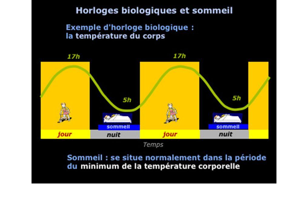 Notre horloge biologique Cest une structure endogène capable de mesurer le temps.