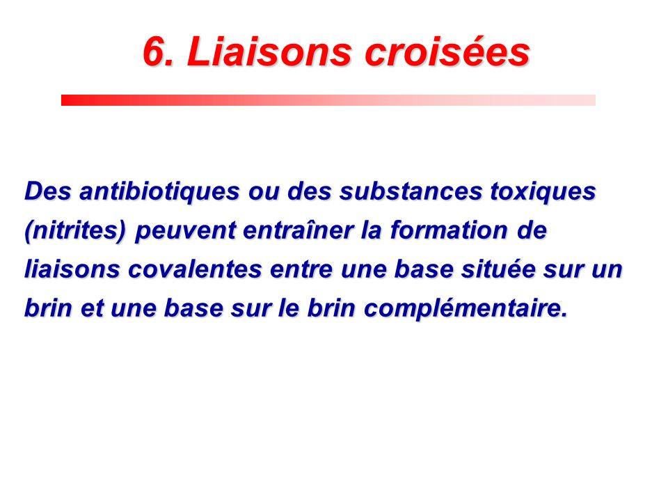 Des antibiotiques ou des substances toxiques (nitrites) peuvent entraîner la formation de liaisons covalentes entre une base située sur un brin et une