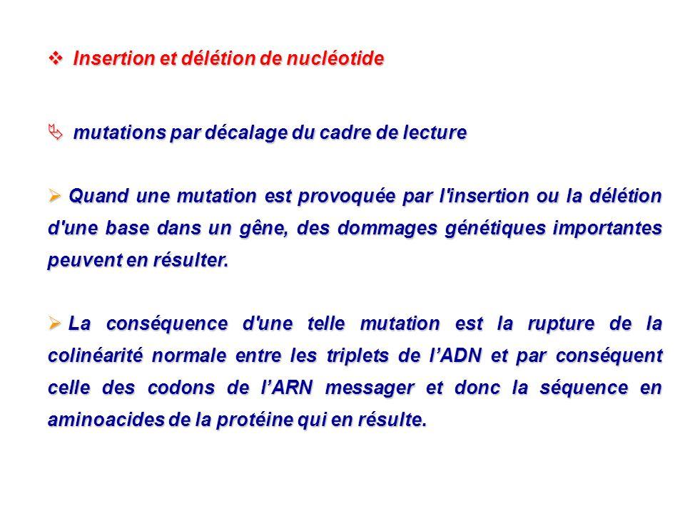 Insertion et délétion de nucléotide Insertion et délétion de nucléotide mutations par décalage du cadre de lecture mutations par décalage du cadre de