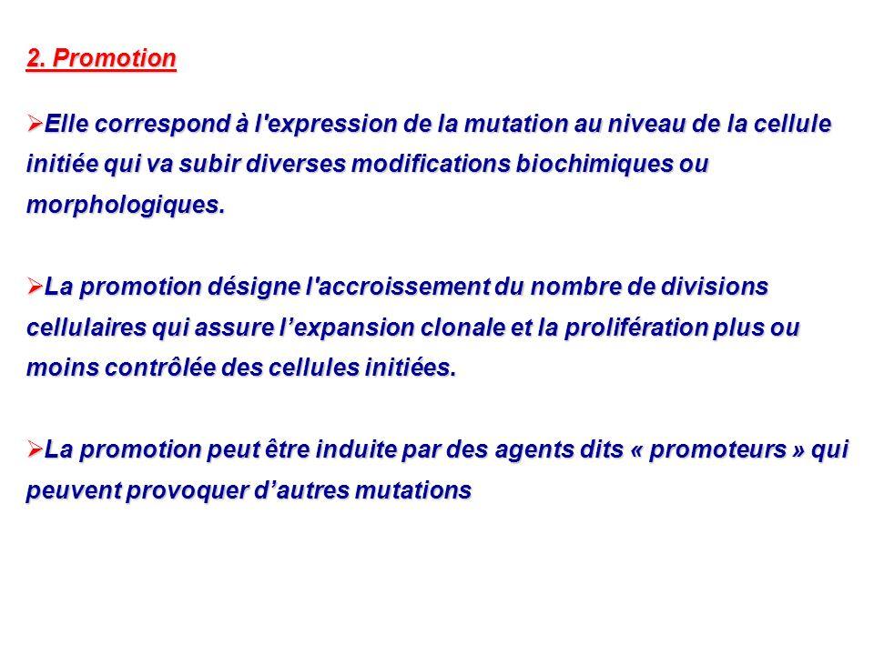 2. Promotion Elle correspond à l'expression de la mutation au niveau de la cellule initiée qui va subir diverses modifications biochimiques ou morphol