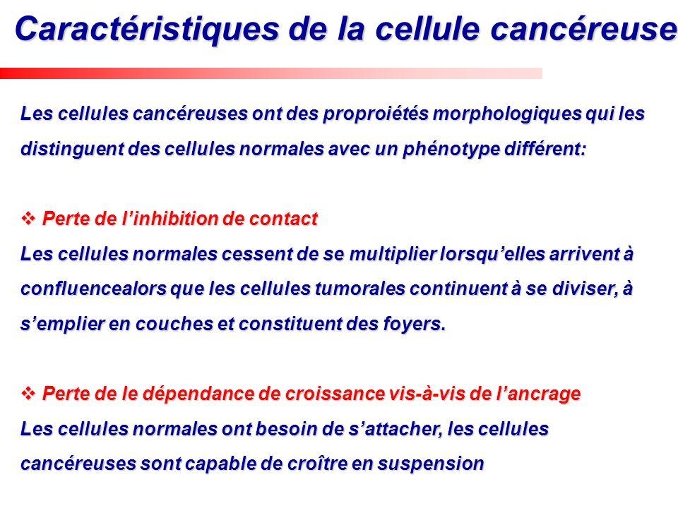 Caractéristiques de la cellule cancéreuse Les cellules cancéreuses ont des proproiétés morphologiques qui les distinguent des cellules normales avec u